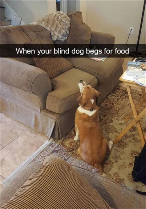 Behold, The Funny Dogs Of Snapchat - 26 Pics