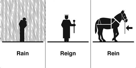 Clever Illustrations Of Words That Sound The Same But Have