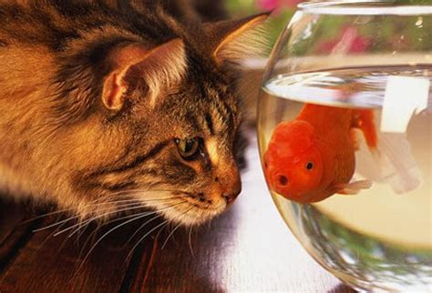 Slideshow: 20 Things You Can Learn from Your Pets