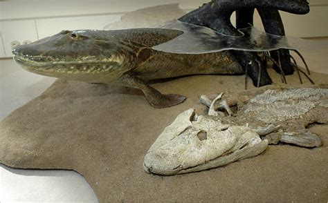 Fossil Called Missing Link From Sea to Land Animals - The